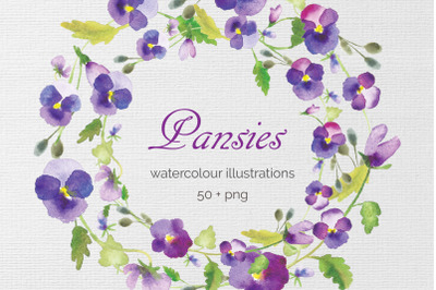 Watercolor Pansy Flowers clip art, illustration