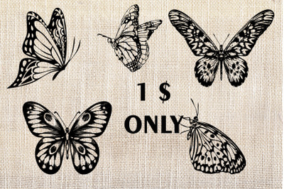 Hand drawn illustrations of butterflies