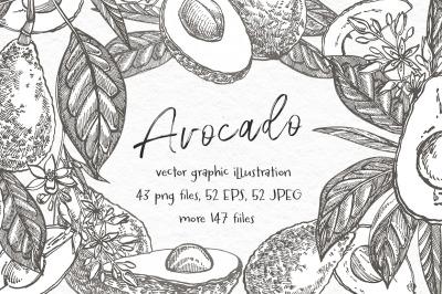 Avocado. Hand drawn illustrations.