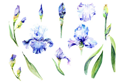 Irises blue Summer sky watercolor png