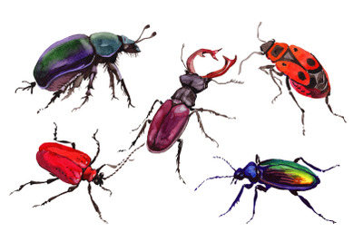 May beetle ordinary watercolor png