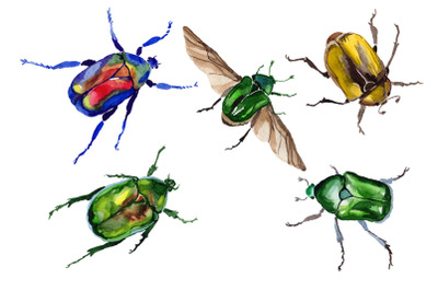 May beetle aurata watercolor png