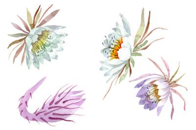 Kadupul watercolor png