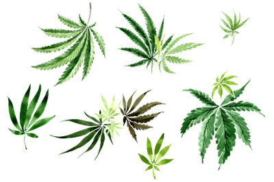 Leaves hemp plant watercolor png