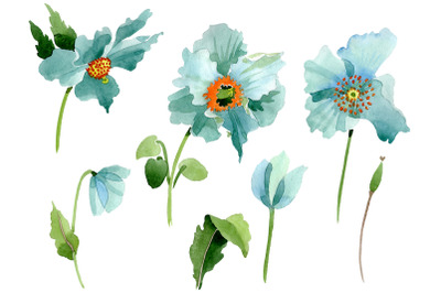 Turquoise poppy Watercolor png