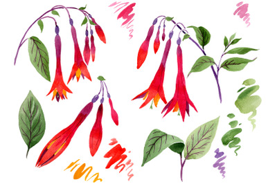 Orange-red Fuchsia watercolor png