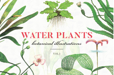 Water Plants Vol.1 30% OFF