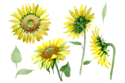 Bright yellow sunflower watercolor png