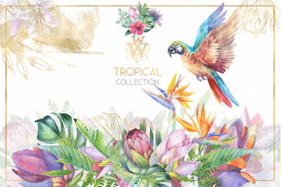Watercolor tropical clip art, floral border clipart, exotic flower