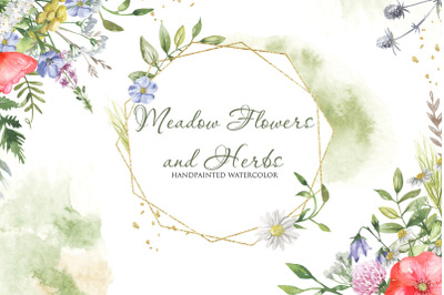 Meadow flowers and herbs. Watercolor collection.