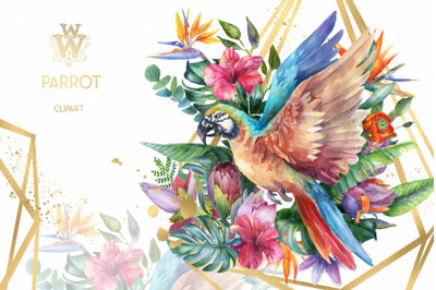 Watercolor parrot clipart, tropical sublimation design, summer bird