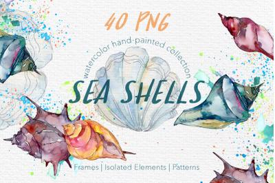 Sea Shells Watercolor png