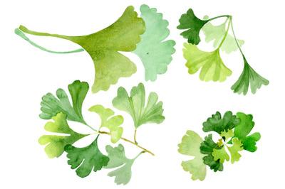 Ginkgo biloba plain green watercolor png