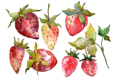 """Strawberry """"Kimberly"""" watercolor png"""