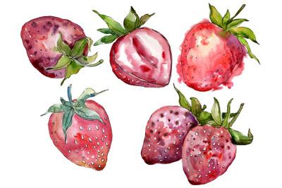 "Strawberry cultivar ""Malvina"" watercolor png"