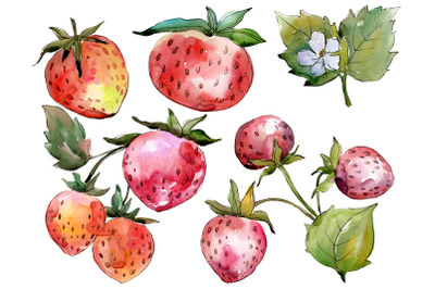 "Strawberry ""Queen Elizabeth"" watercolor png"