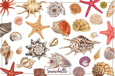Seashell collection. Summer pattern