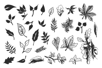Foliage. Hand drawn leaves.