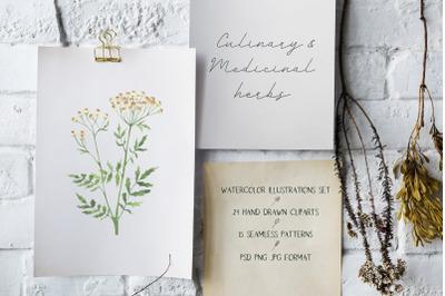 Culinary & Medicinal herbs. Watercolor illustrations set