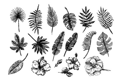 Tropical leaves illustration set