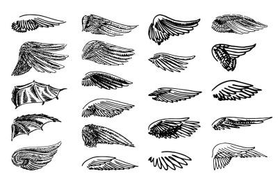 Wings illustration set