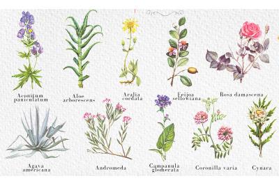 10 retro botanical flowers illustration in retro style