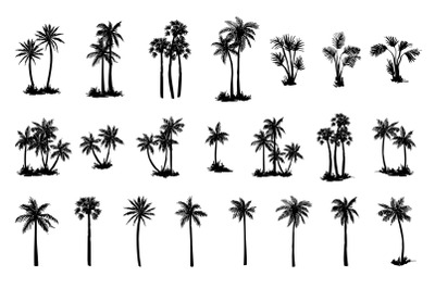 Hand drawn palm tree set