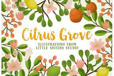Citrus Grove Illustrations