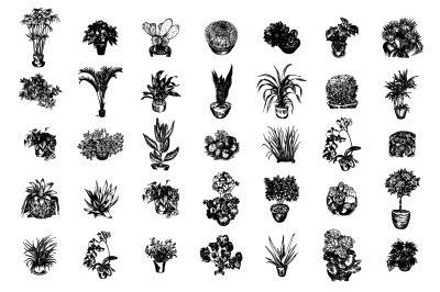 Home plants sketch illustration set.