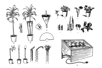 Houseplants Hand drawn sketch set