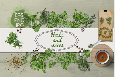 Collection of hand drawn herbs and spices. Monochrome&color.