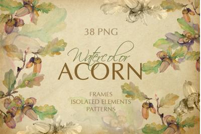 Acorn Watercolor png