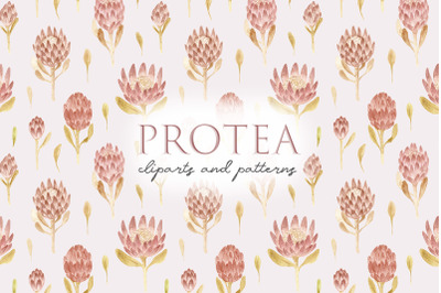 Watercolor Protea Flowers. Seamless Patterns and Cliparts