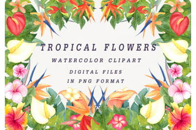Watercolor clipart tropical flowers