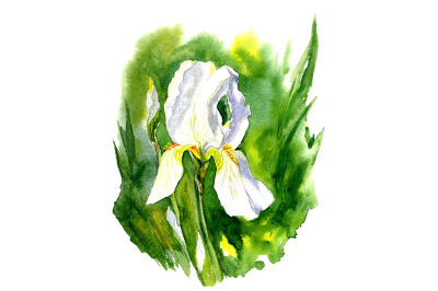 Abstract watercolor, sketch drawing iris.
