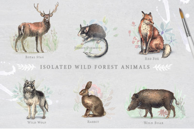 6 Isolated Wild Forest Animals