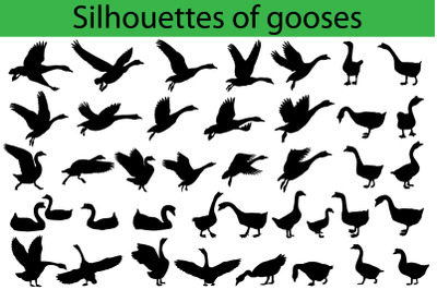 Silhouettes of gooses