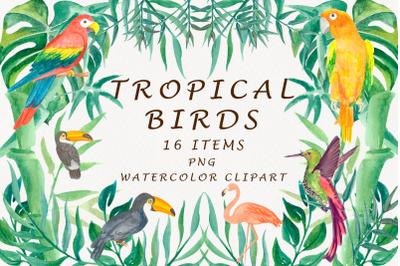 Tropical Birds Watercolor