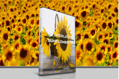 200 HIGH QUALITY SUNFLOWER, Flowers, Digital Photoshop Overlays
