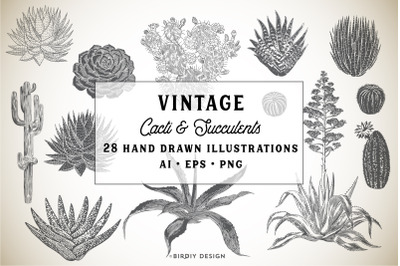 Hand Drawn Succulents & Cacti Set