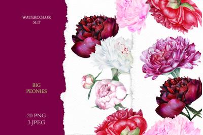 Watercolor Peony Botanical  Set