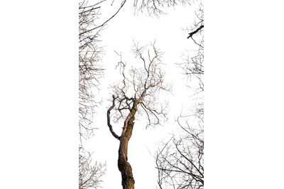 An image of a tree surrounded by branches, isolated on a transparent b