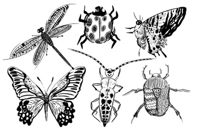 6 hand-drawn insects set