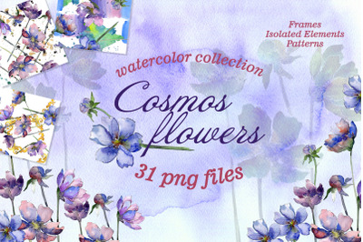 Cosmos flowers Watercolor png