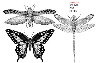 3 hand drawn vintage black insects sketches