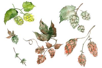 Hops plant Watercolor png
