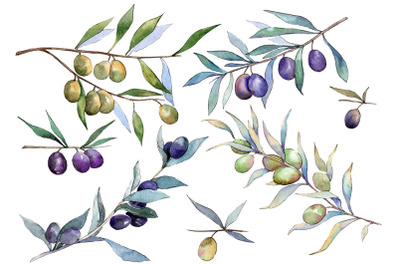 Branch olive watercolor png