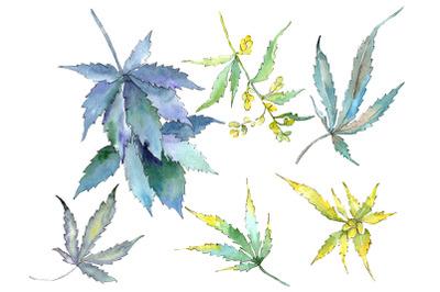 Cannabis Watercolor png