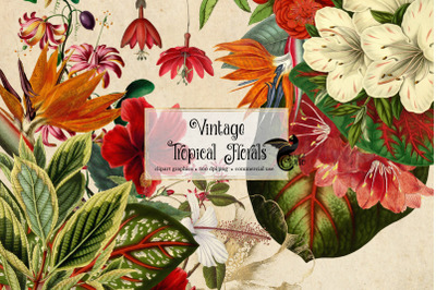 Vintage Tropical Floral Clipart