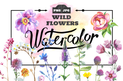 Wild Flowers Watercolor Set, Hand Painted Flowers, Free Commercial Use